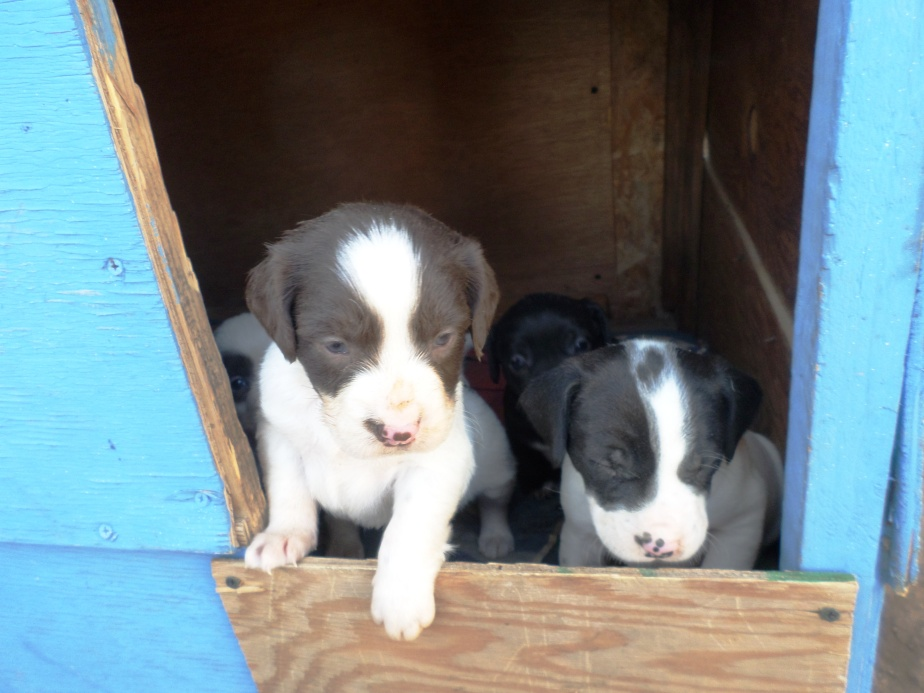 puppies in house 1.jpg